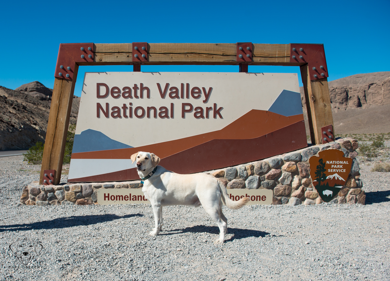 Death Valley Bear