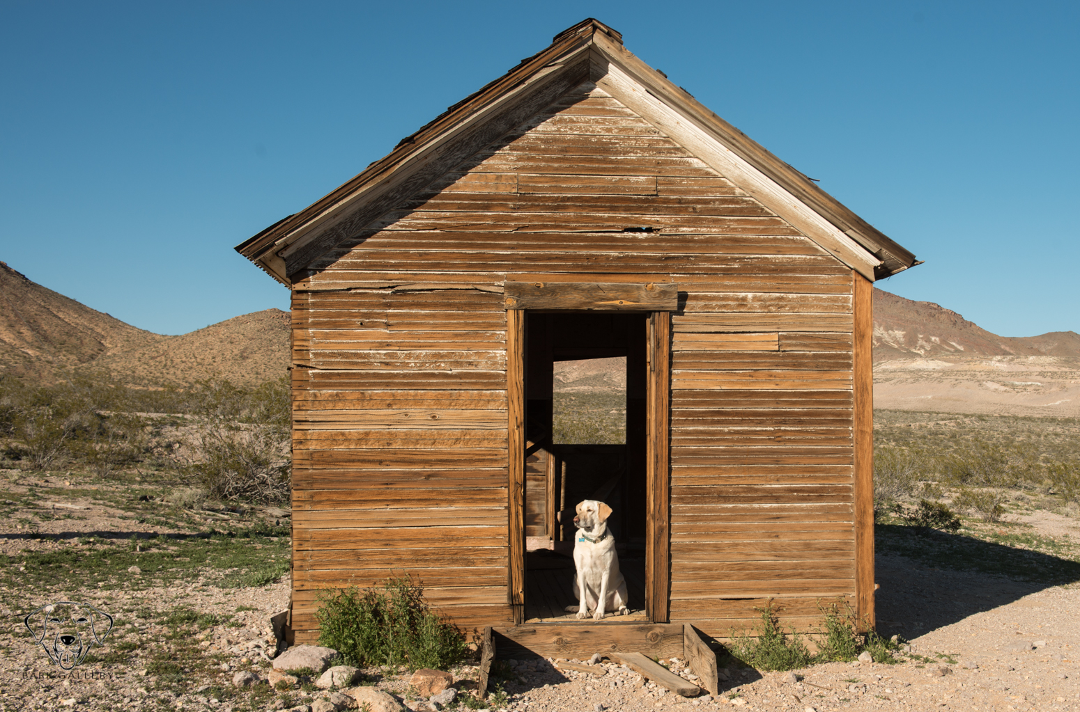bear-dog-house