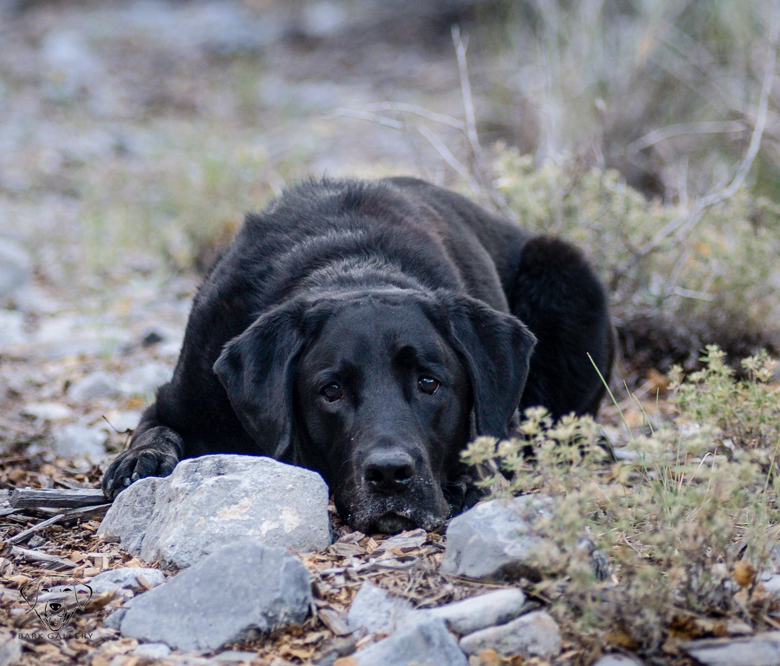 dog-photographer-las-vegas