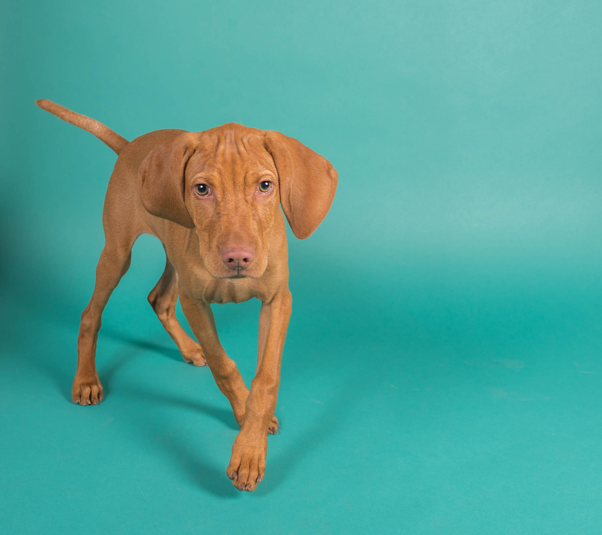 Puppy Studio Photo