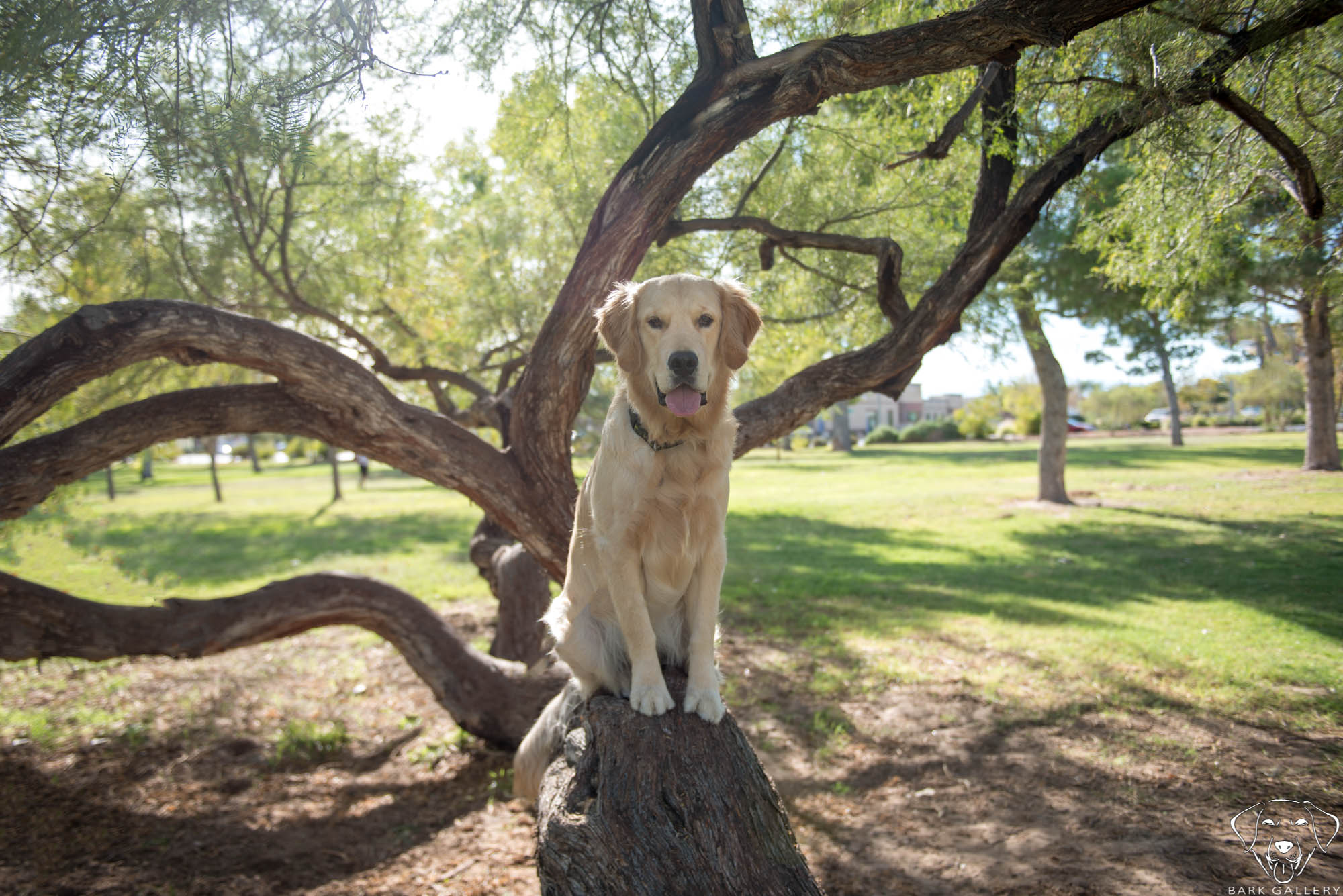 dog-outdoor-park-photo