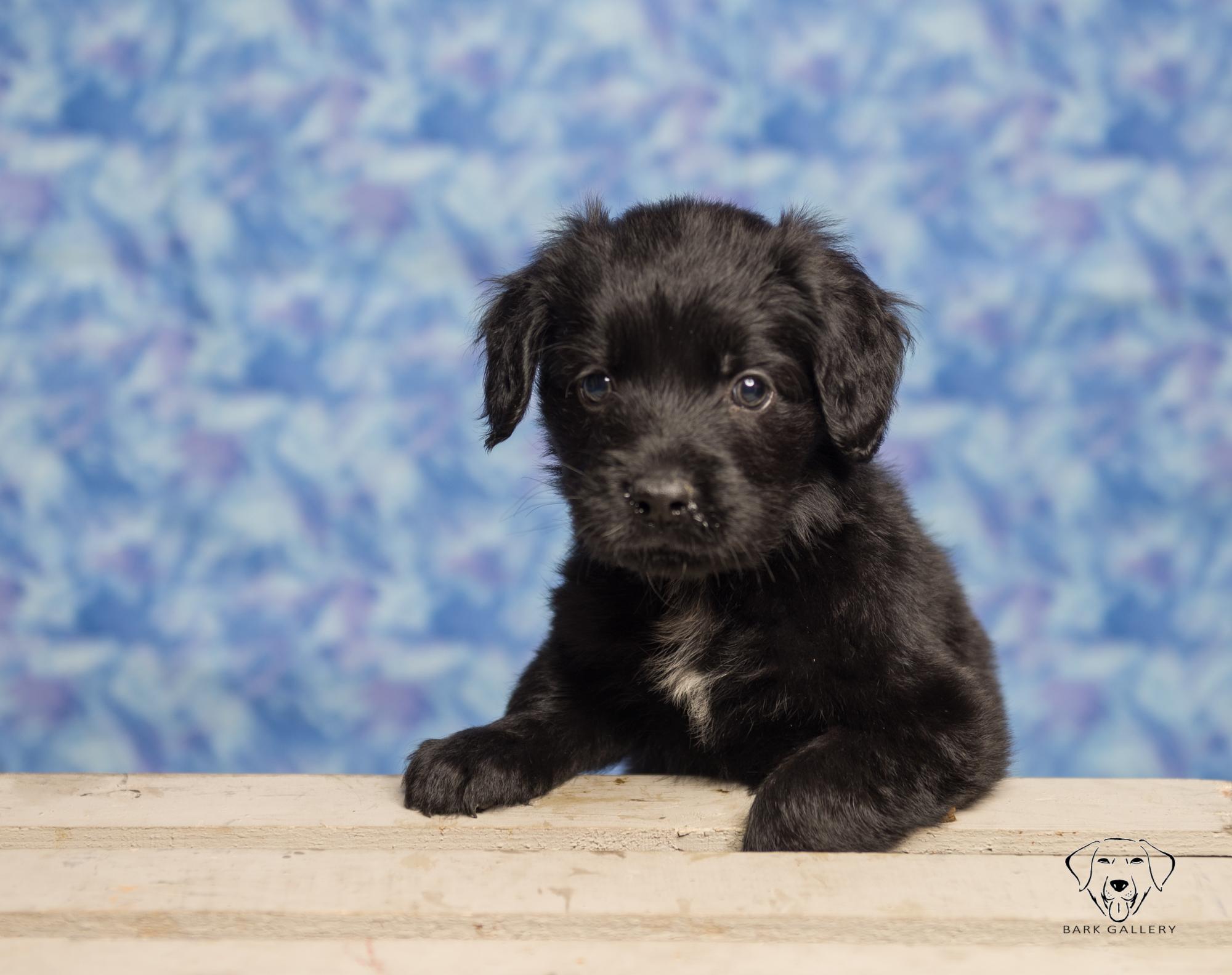 Perky Puppy!
