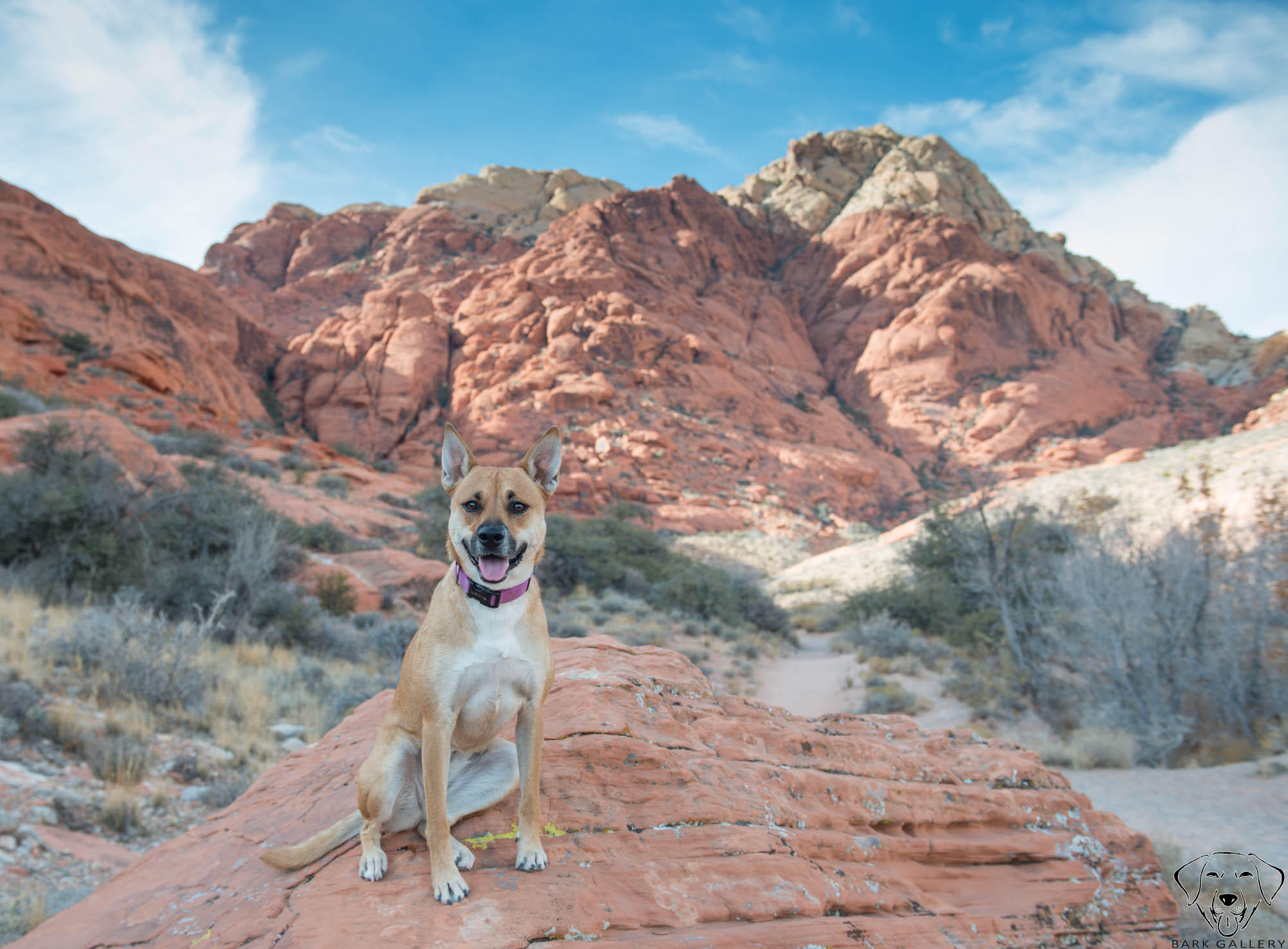 Dog Photographer- Las Vegas, NV