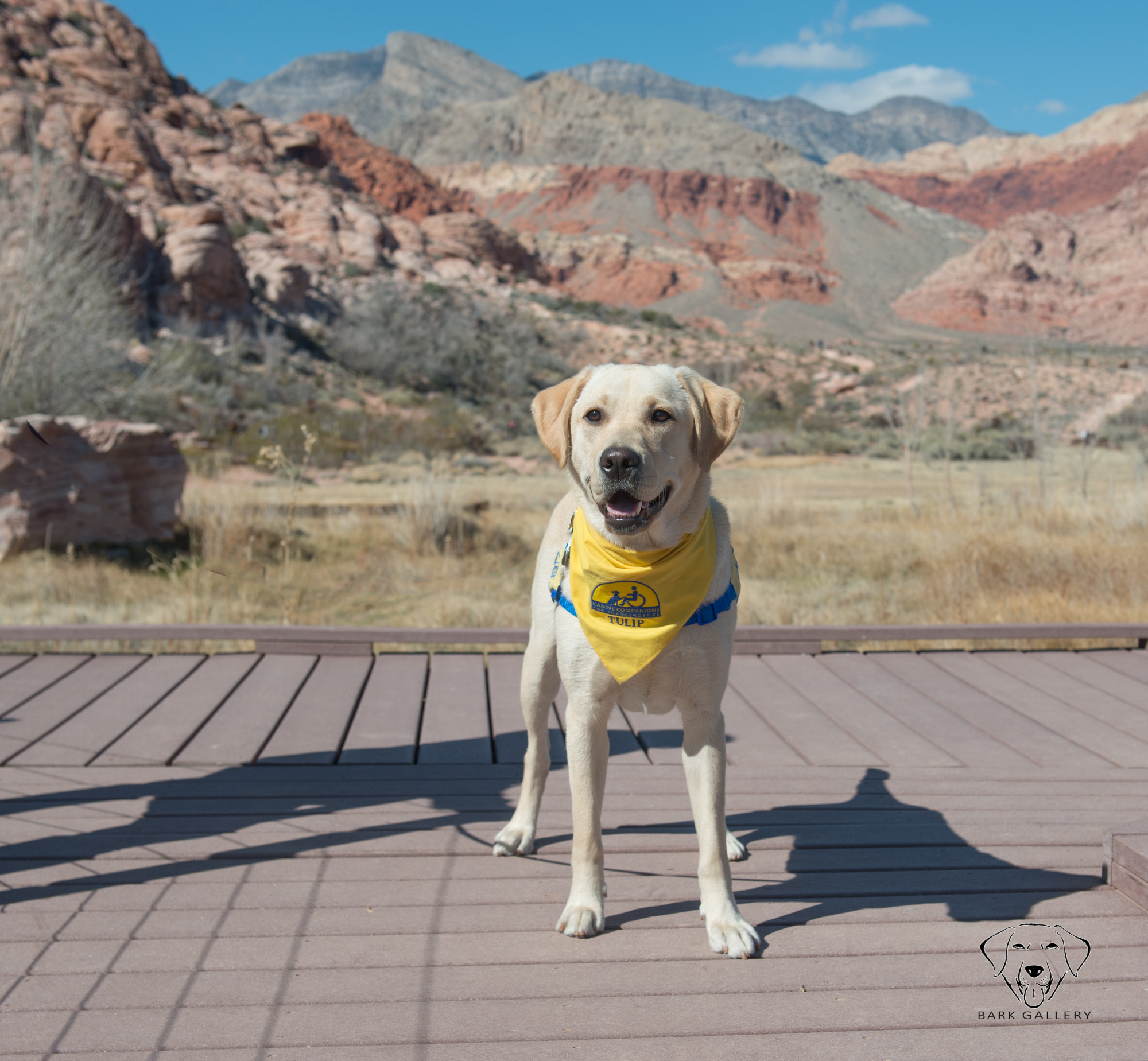 Tulip enjoying a nice stroll along Red Rock. (Leash removed in post.)