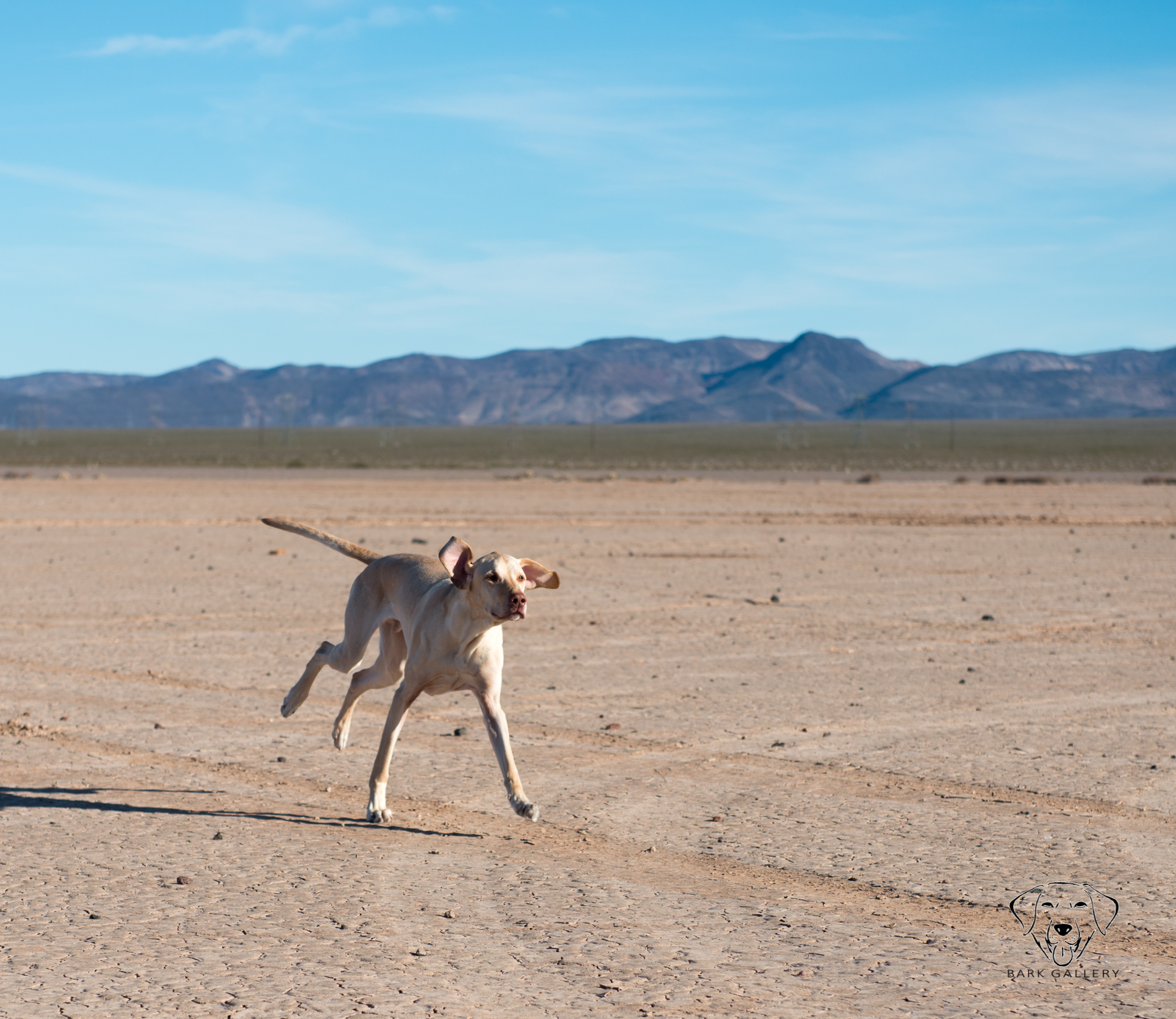 dog-las-vegas-dry-lake-bed