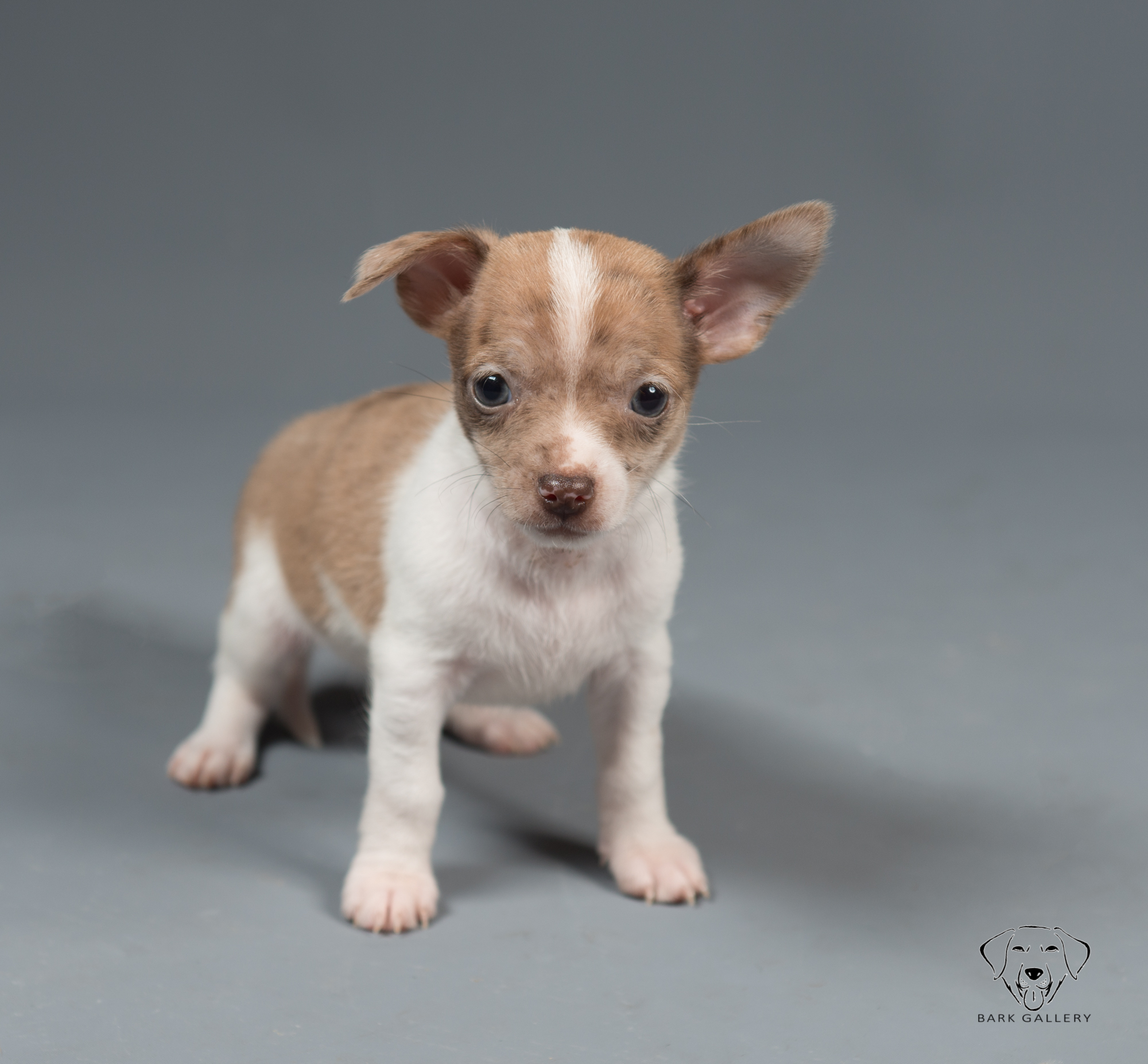 dog-breed-photography
