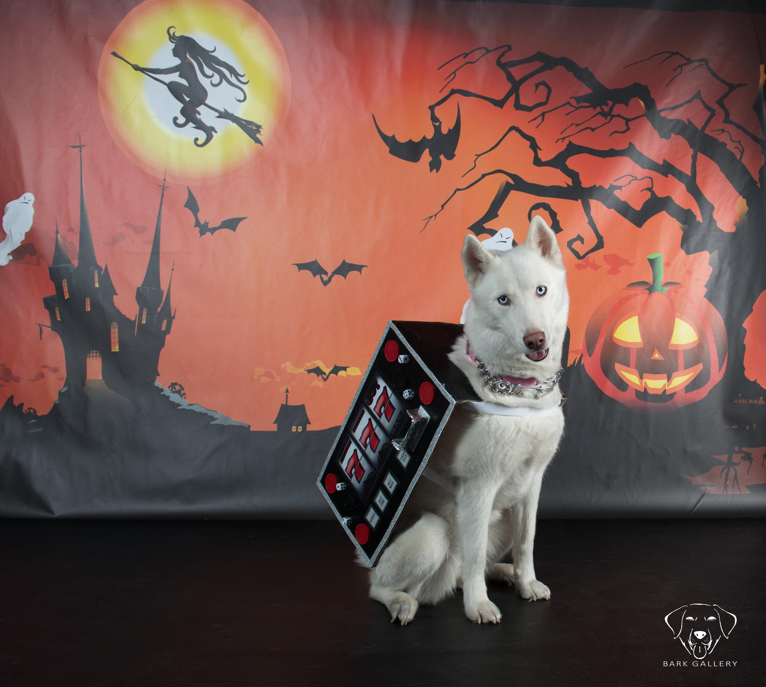 vierkandt-photography-pets-dogs- fundraiser