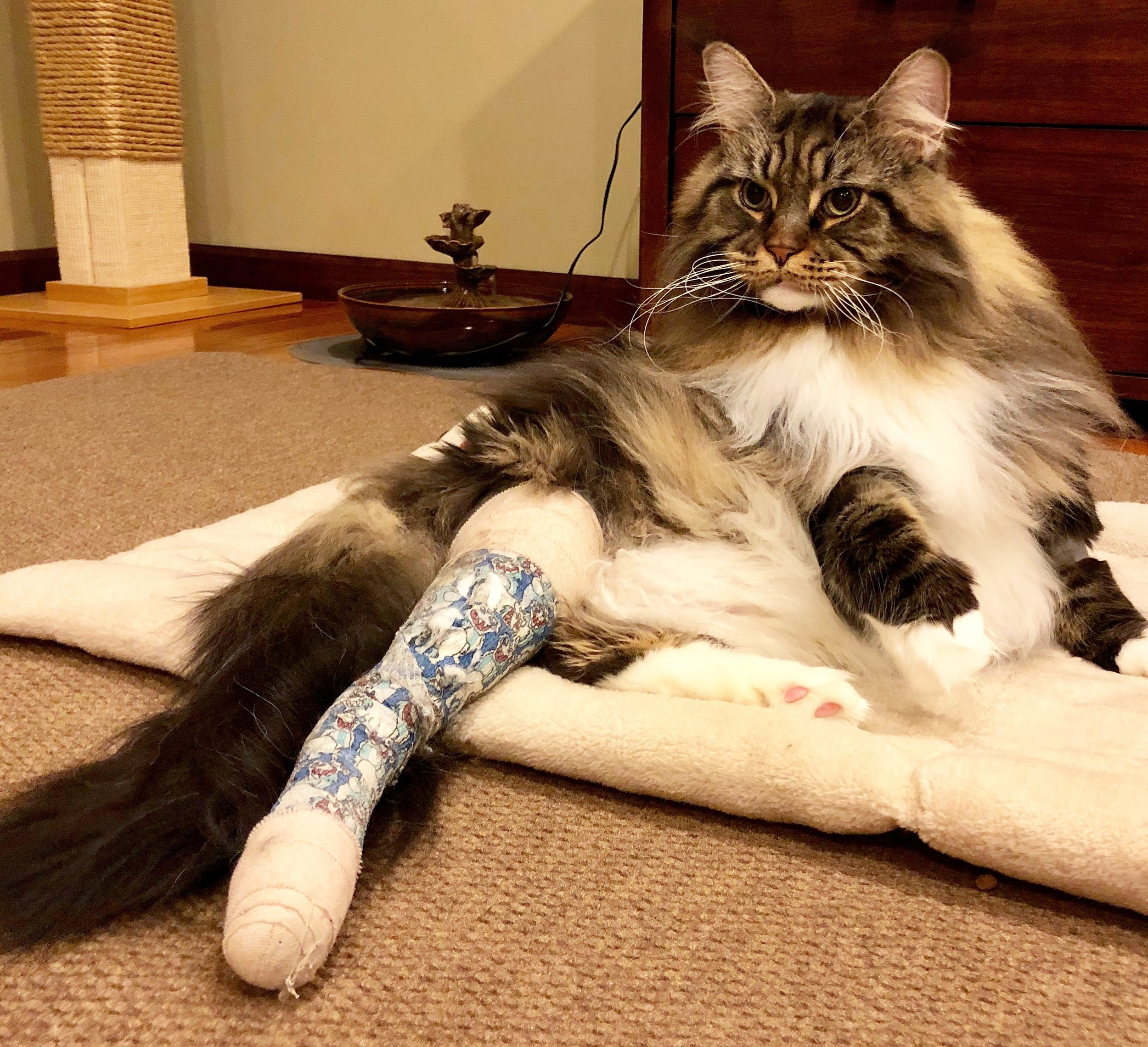 Rio recovering after surgery, December 1, 2018