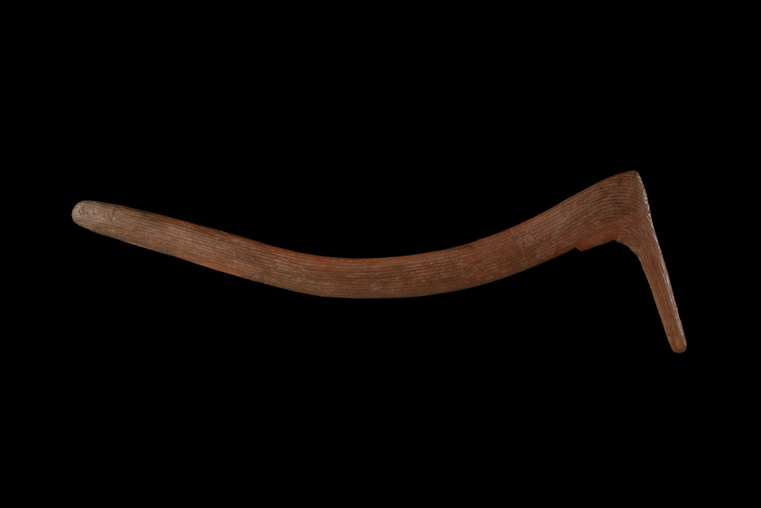 The Warumungu men of Tennant Creek and Alice Springs threw hooked boomerangs into flocks of parrots and ducks as they took off from waterholes. They fashioned them from the base of wattle trees, where the trunk meets the root, to give them strength. Image the British Museum.