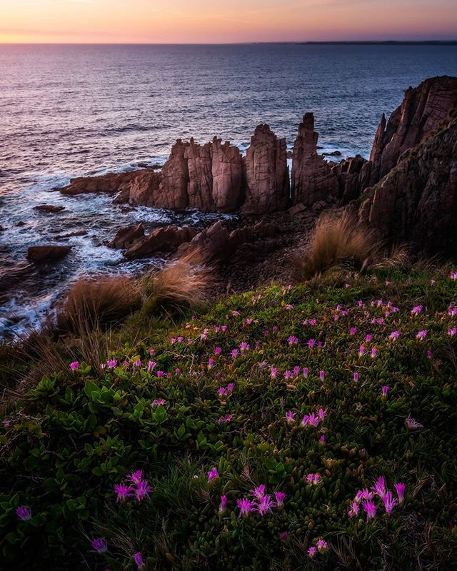 Easily one of the most popular photography locations in Victoria. This image was shot a weekend or so back with @phillipislandnp Ranger Andy joined us on this sunset hike giving use a heap of information about the Short-tailed Shearwaters and their annual 8,000km migration from Phillip Island to Alaska. . Be sure to jump over and check out @phillipislandnp . Also if you are new to my page welcome and make sure you click the follow button to keep up to date with all my work. . #phillipisland #phillipislandnp #sunrise #wandervictoria #australia #seeaustralia #visitmelbourne #samyangaustralia #benroaustralia #wow_australia2018 #takemetoaustralia #longexposure_shots #longexpoelite #australialongexposure #palebluedotphotography #bestintravel #australia_shotz #tenbatough #ig_australia #jaw_dropping_shots #ausgeo #bom❤️weather #instameet #goodmorning