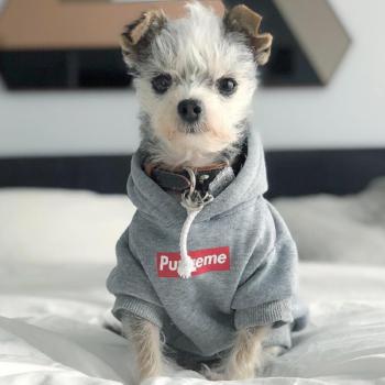 Supreme Dog Hoodie