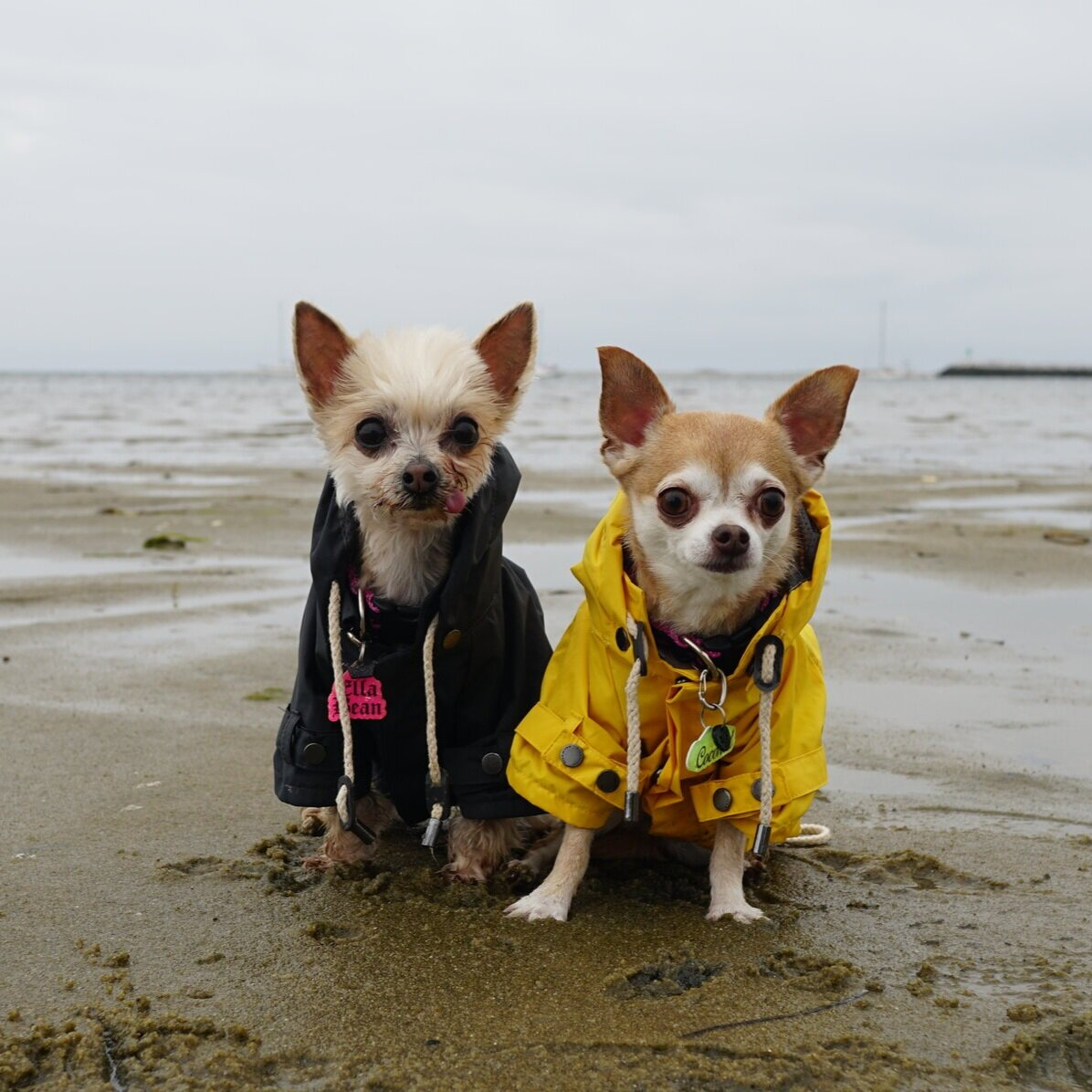 our fave  raincoats from max-bone  are perfect for every season!