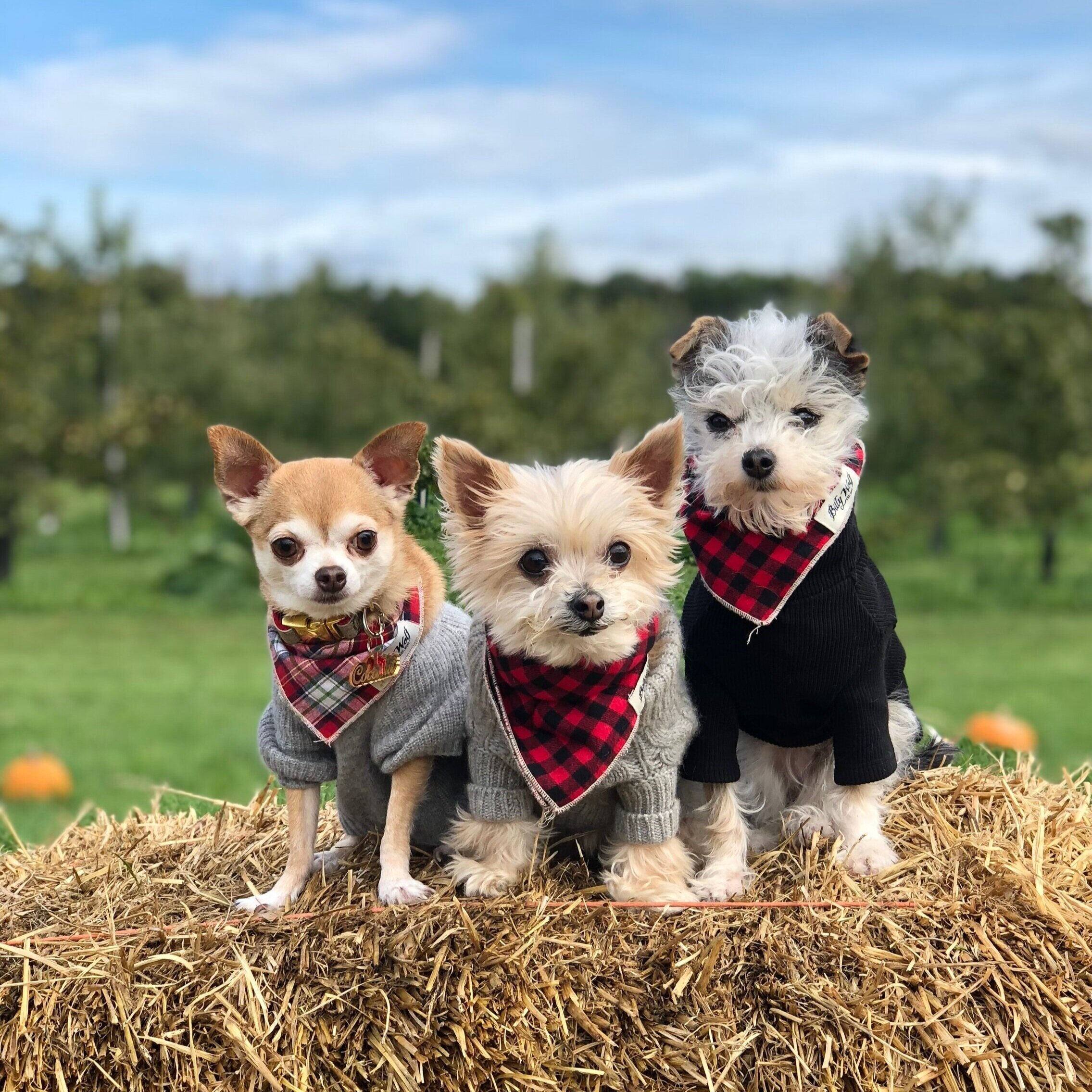 plaid bandannas are key to the perfect fall accessory. we love these from  Lucy & Co .