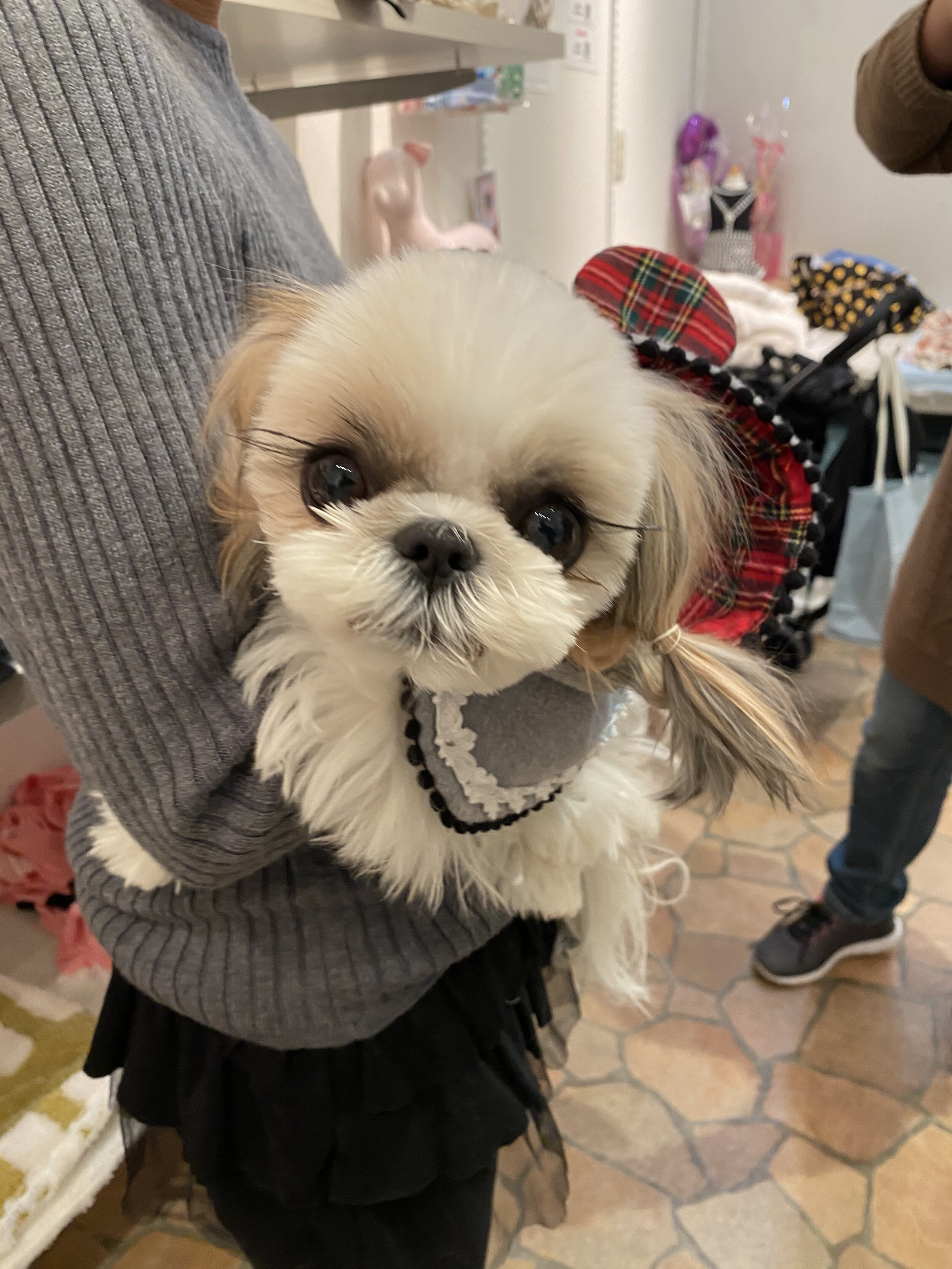 The Best Stores For Dog Clothes In Japan Ella Bean The Dog