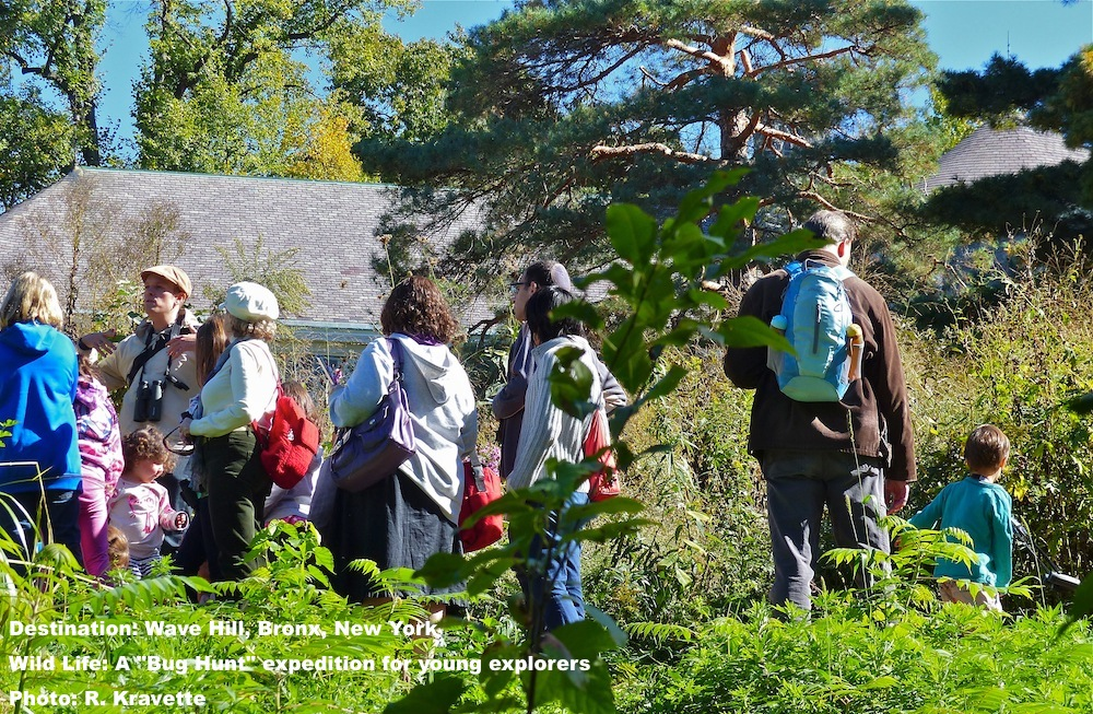 Kids & parents on a Bug Hunt with naturalist at Wave Hill, The Bronx, New York. the kids were enthralled.  Image: R. kravette