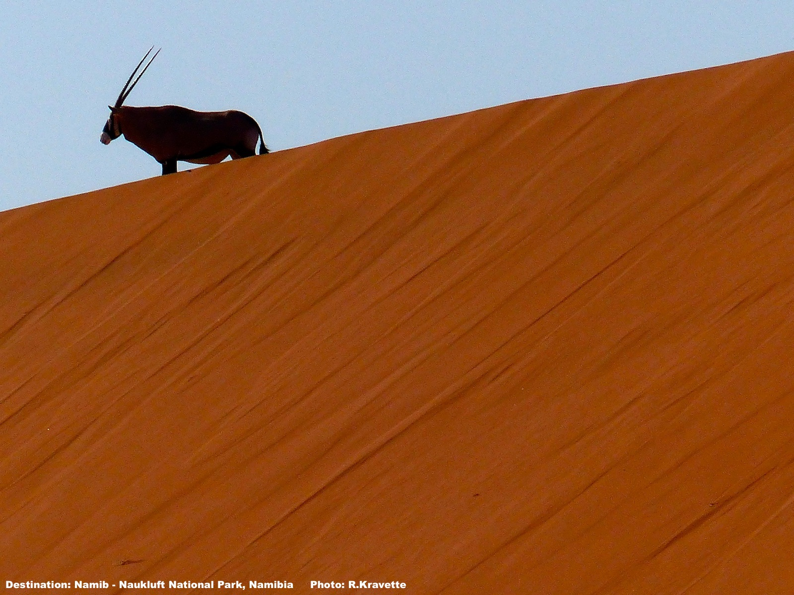 The Oryx appeared out of nowhere IMAGE: ©R.KRAVETTE