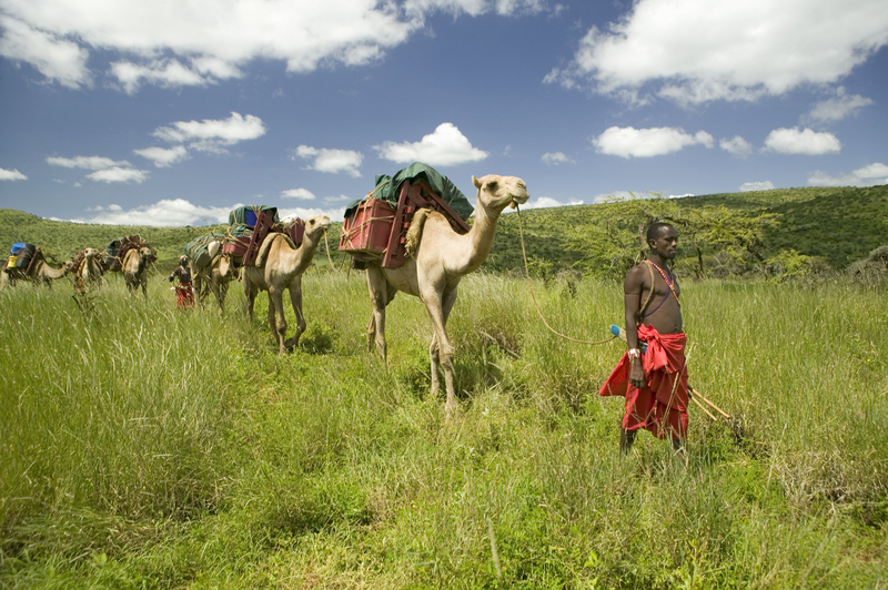 A Lewa Wildlife Conservancy camel safari is an unforgettable experience.Image:  ©Americanspirit⎮Dreamstime.com