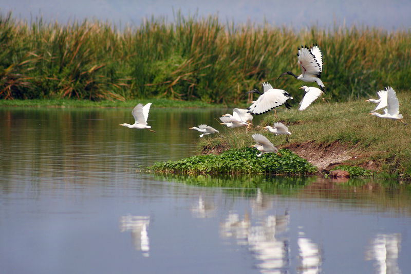 The Ngorongoro Conservation Area (NCA) in Tanzania is famous for their water birds as well wildlife. Image:  ©Blossfeldia⎮Dreamstime.com