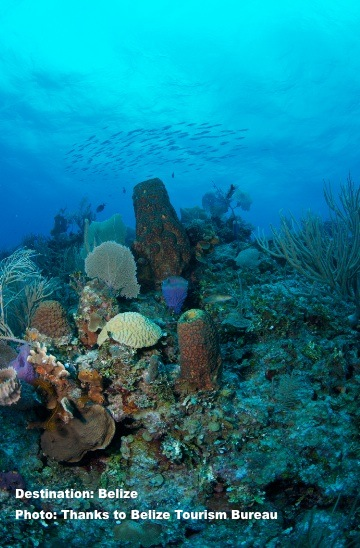 Belize has one of the largest coral barrier reefs on the planet. Many of the species, including shark and ray species can be found here. Image: Belize Tourism Bureau.