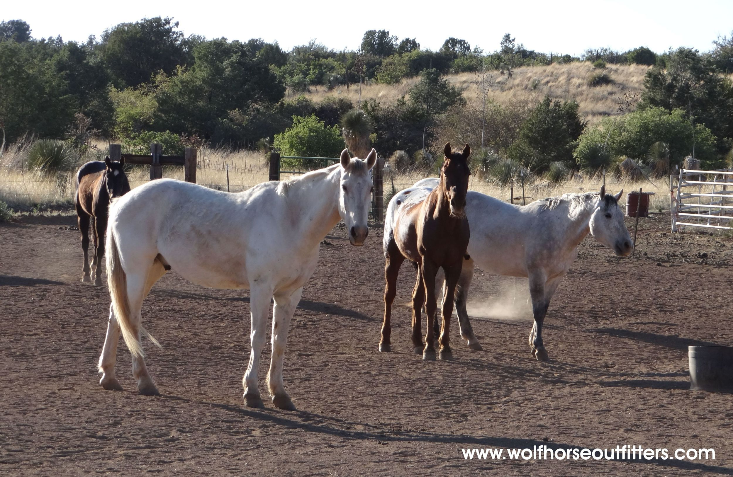 My friend, Barbel, from Germany has visited 6 times (this year with her young children). She told me that the horses at Joe Saenz's, Wolfhorse Outfitters are gentle, experienced and wilderness ready. Image: Thanks to  ©Wolfhorse Outfitters