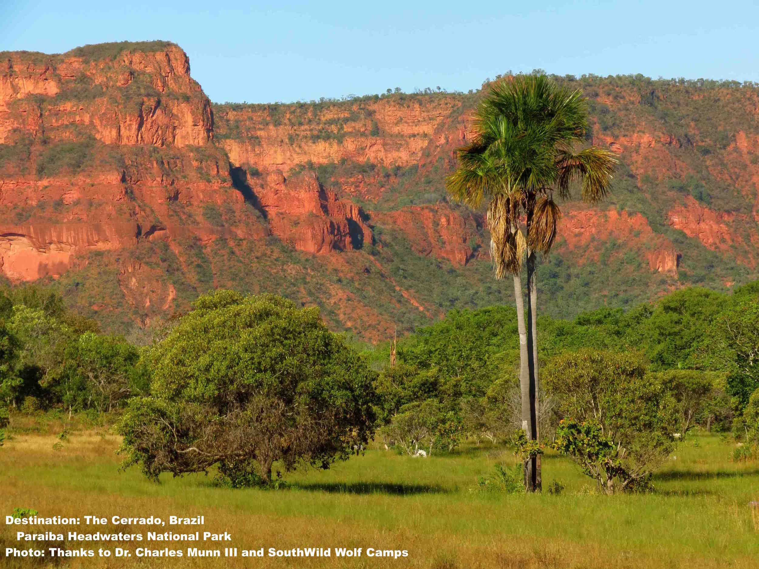 Brazil's Cerrado is one of the most bio-diverse regions on the planet - and disappearing faster than the Amazon rainforest. Photo: Thanks to Dr. Charles Munn III and SouthWild Wolf camps.