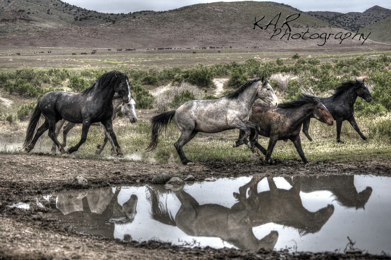 Kate and Adam capture the reflection of Wild, feral horses in Utah. Image: Thanks to ©KAR Photography