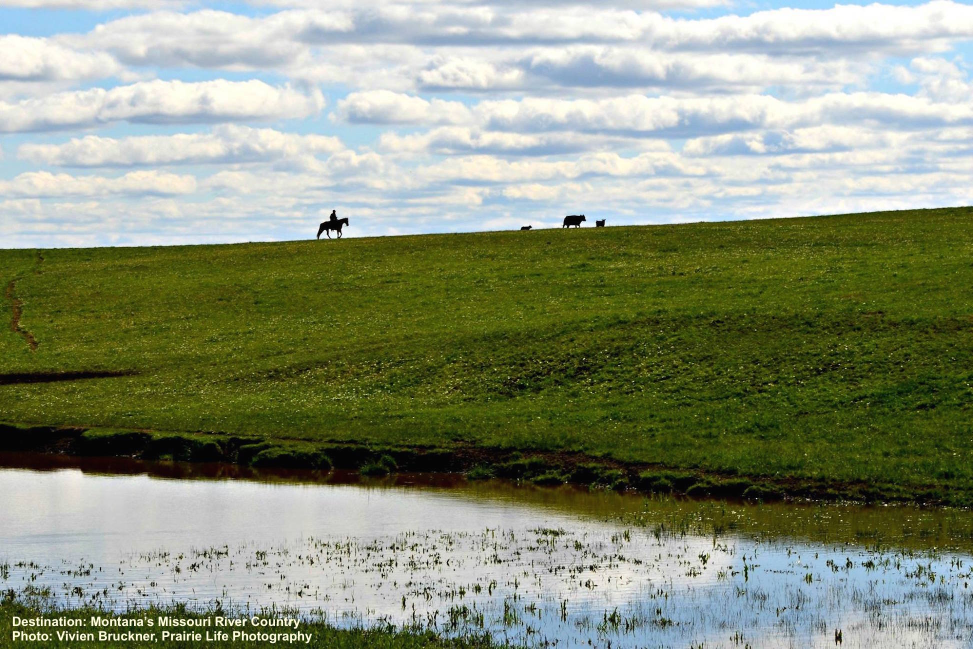 CHASING COWS. A RANCH AND OPEN SKY OUTSIDE OF MALTA, PHILLIPS COUNTY, MONTANA. IMAGE: COURTESY OF ©VIVIEN BRUCKNER, PRAIRIE LIFE PHOTOGRAPHY & PHILLCO ECONOMIC GROWTH COUNCIL.