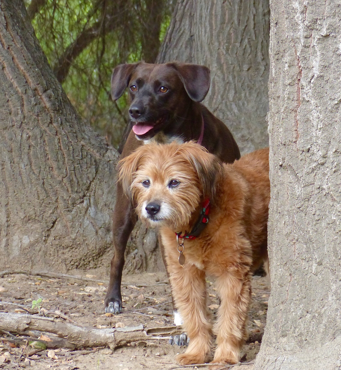 """THE MAIN DIFFERENCE BETWEEN DOMESTIC DOGS & THEIR WOLF COUSINS IS LOCATED IN THE BRAIN. EVEN IN THE 'WILD"""" OUR ADORED PETS ARE JUST NOT AS MATURE. IMAGE: R. KRAVETTE"""