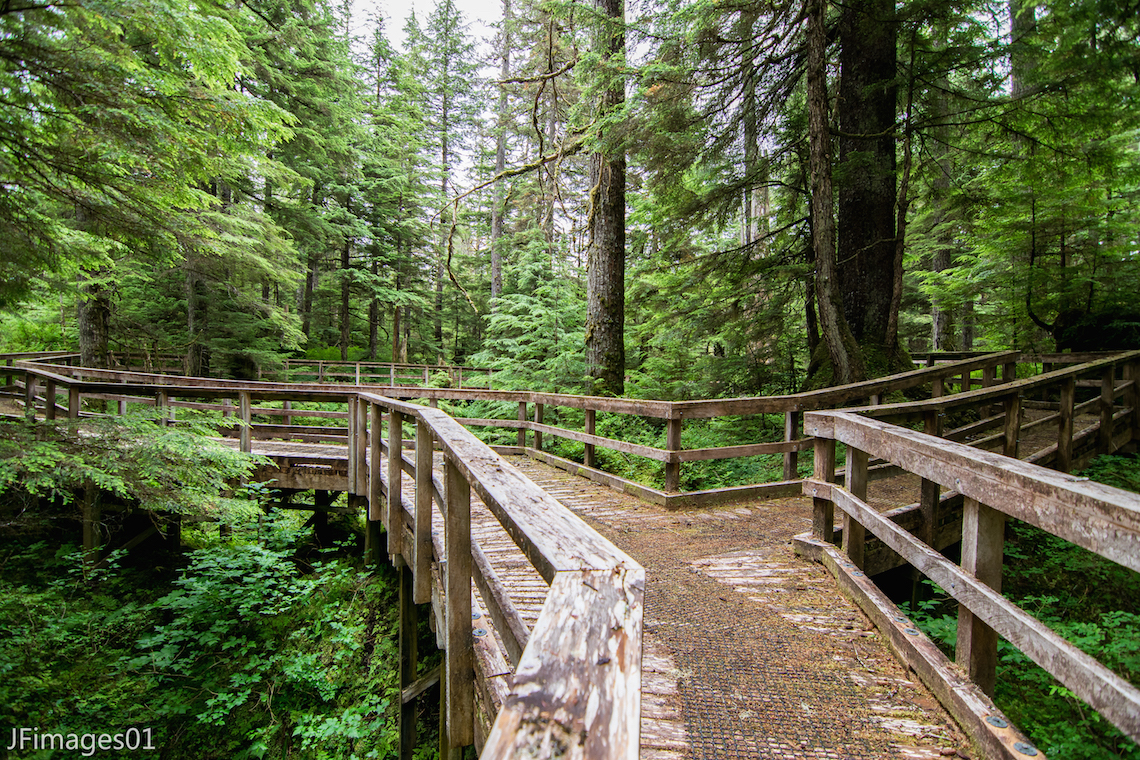 THE BEAVER FALLS INTERPRETIVE BOARDWALK TRAIL IS THE PERFECT WAY FOR FAMILIES TO EXPLORE THE RAINFOREST. THIS TRAIL LEADS TO EL CAPITAN CAVE FOR THE MORE ADVENTUROUS (ADULT) MEMBERS OF THE EXPEDITION. IMAGE: THANKS TO JFIMAGES01