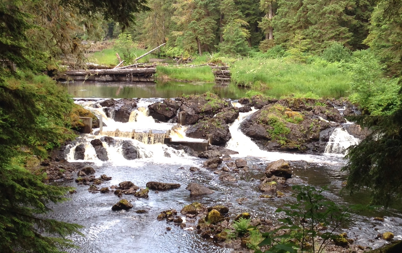 HATCHERY CREEK FISH PASS. NEAR COFFMAN COVE. WHEN THE SALMON RUN - SO DO THE BEARS! WATCH FOR THEM AND REMEMBER: BEARS ALWAYS HAVE THE RIGHT OF WAY! IMAGE: THANKS TO LUKE.