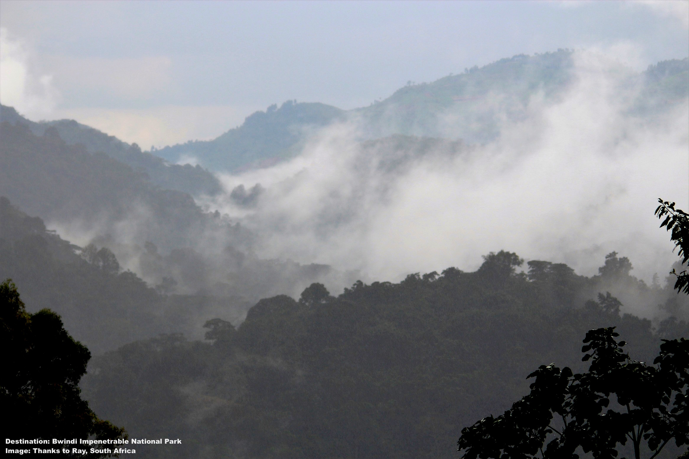 BWINDI IMPENETRABLE NATIONAL PARK SITUATED IN UGANDA'S SOUTHWEST AT THE EDGE OF THE RIFT VALLEY. THE MIST COVERED MOUNTAINSIDES CONCEAL THE RAINFOREST THAT CONCEALS THE MOUNTAIN GORILLAS.