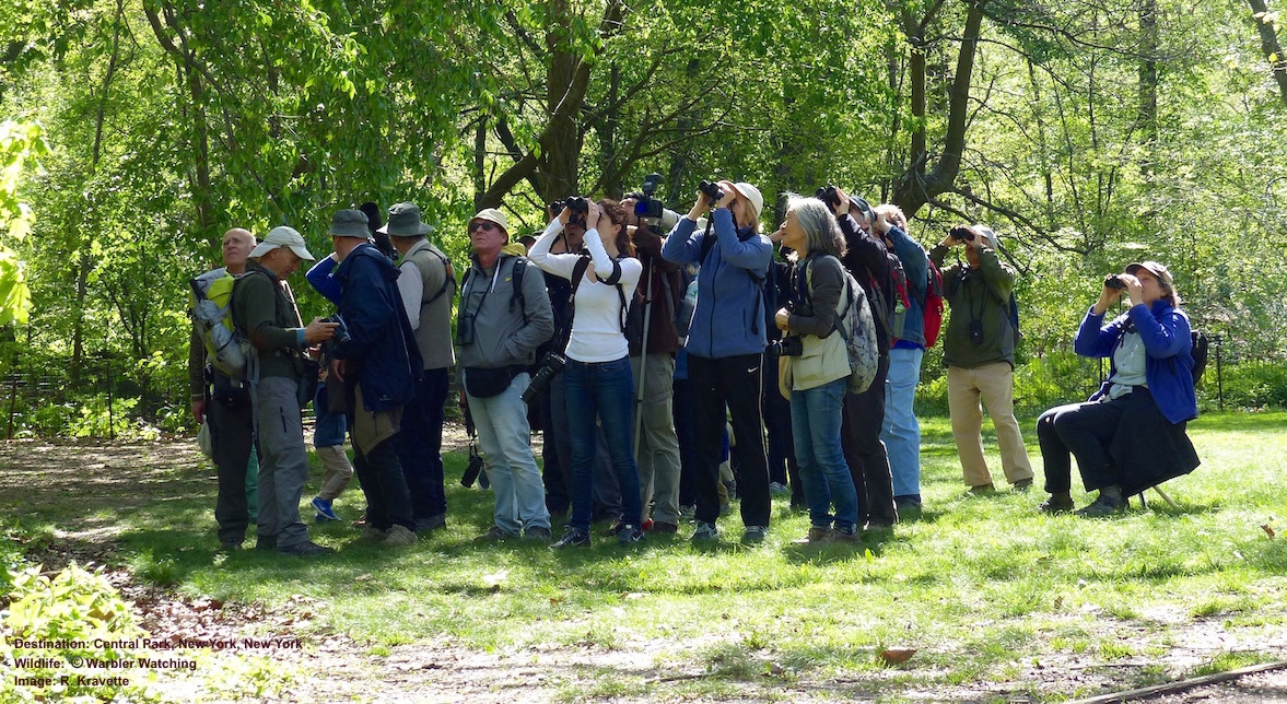 LOOKING FOR WARBLERS? LOOK UP! BIRDERS ARE HAPPY TO SHARE THE EXCITEMENT - ASK WHAT THEY ARE LOOKING AT! IMAGE: R.KRAVETTE