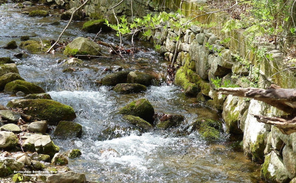 """THE DOODLETOWN """"GHOST TOWN"""" TEAMS WITH LIFE. FROM THE LITTLE BRIDGE ACROSS THIS STREAM WE WATCHED BUTTERFLIES, BIRDS, MINNOWS, TURTLES AND MORE. IMAGE: R. KRAVETTE"""