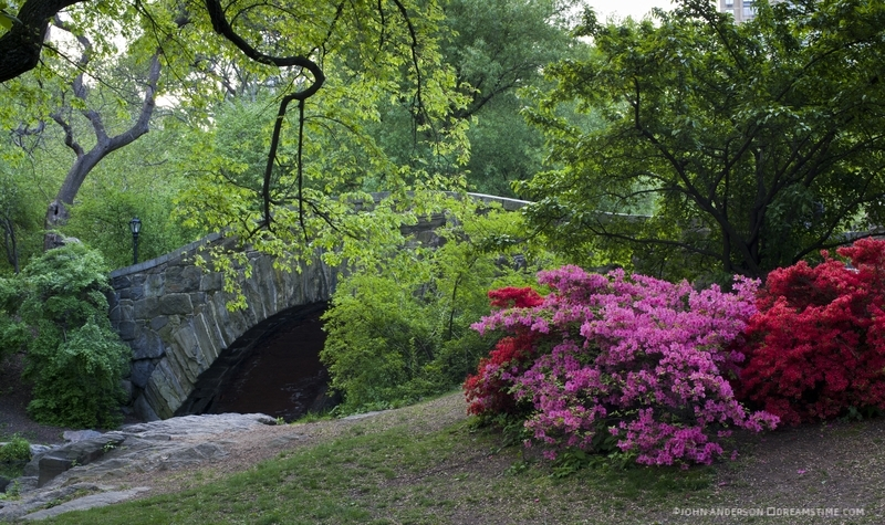 CENTRAL PARK IS A MUCH NEEDED RESTING STOP FOR WARBLERS AND OTHER BIRDS ON THE ATLANTIC FLYWAY MIGRATION ROUTE. IT IS A WELCOME SANCTUARY FOR CITY-LIVING HUMANS TOO. IMAGE:  ©JOHN ANDERSON ⎮DREAMSTIME.COM