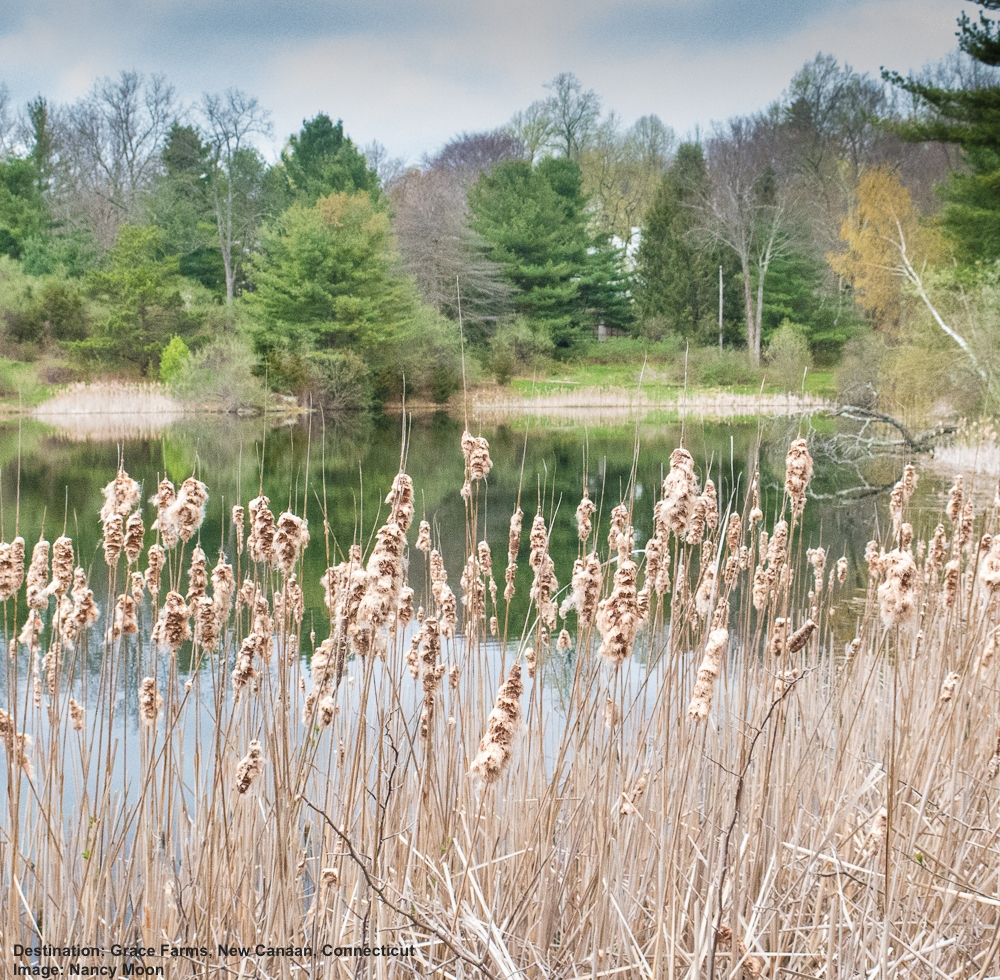 ON EARH DAY THIS SPRING, NANCY MOON AND I ENJOYED A PERFECT PEACEFUL MOMENT AT THE CATTAIL POND AT GRACE FARMS. WE WILL BE BACK. WE HOPE TO SEE YOU THERE. IMAGE: © NAncy Moon