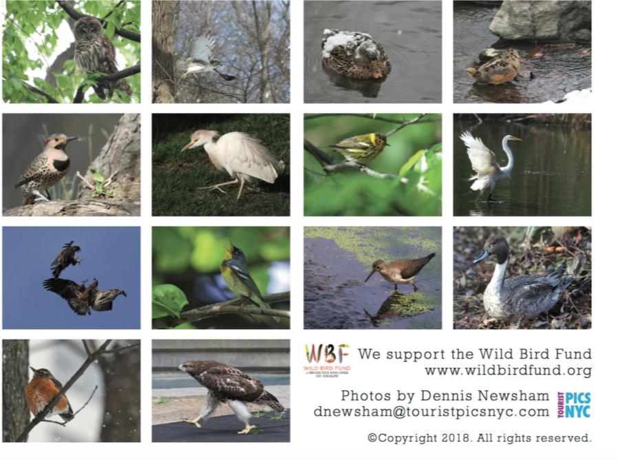 Bird_Calendar_Screen_Shot_Dennis_Newsham.png