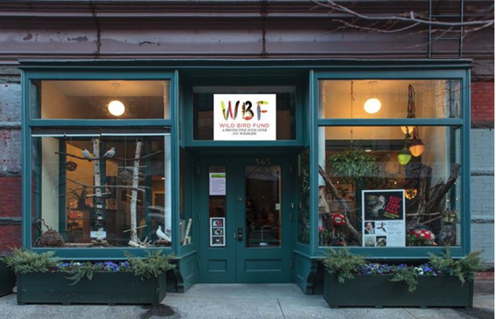 WILD BIRD FUND NEEDS YOUR HELP, THE BIRD RESCUEs THEY MANAGE FROM THIS TINY SPACE ON COLUMBUS AVENUE, ON THE UPPER WEST SIDE OF NEW YORK CITY ARE SUPPORTED BY YOU. IMAGE: COURTESY OF WILD BIRD FUND.