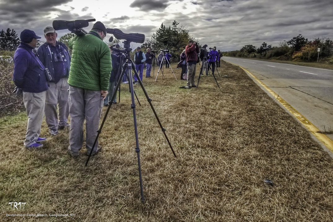 PHOTOGRAPHERS AND BIRDWATCHER CAME FROM ALL OVER THE COUNTRY TO SEE THE WRONG-TURN CORNCRAKE - BUT STAYED A RESPECTFUL DISTANCE AWAY. IMAGE: TOM REICHERT