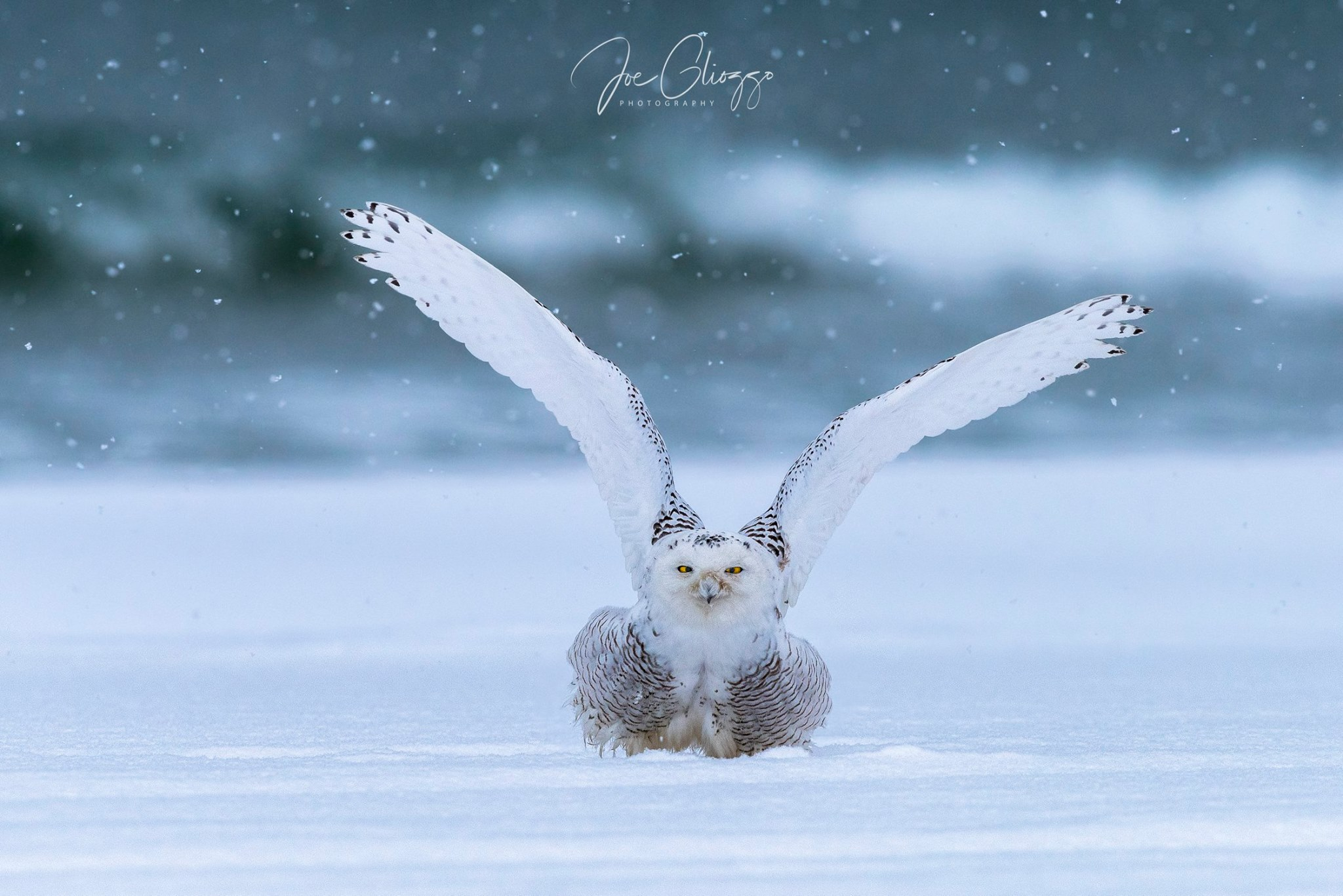 WELCOME TO 2018! JOE GLIOZZO CAPTURED THE MOMENT WITH THIS SNOWY OWL DURING THE YEAR'S FIRST SNOW STORM AT THE NEW JERSEY SHORE.