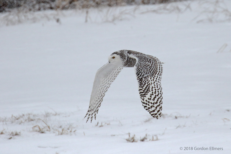 xxOwl, Sny Hunting 4 of 13 Ft Ed Snow storm .jpg