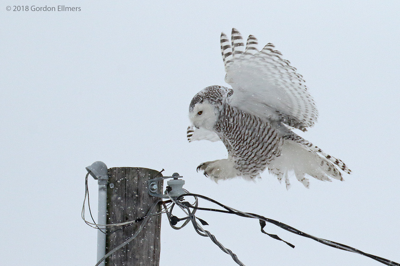 xxowl, sny ft Ed 9:13 hunting snow storm 020418_13.jpg