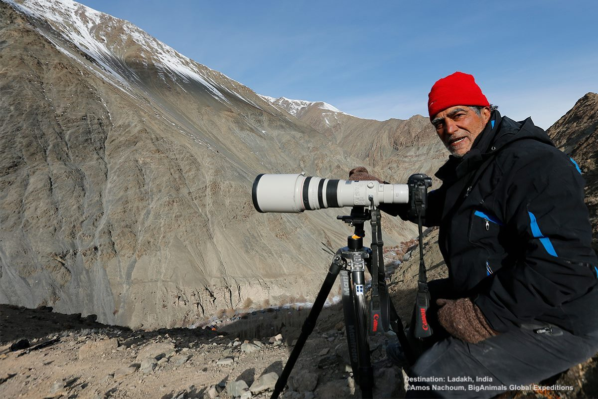 PATIENCE AND UNDERSTANDING THE ANIMAL'S BEHAVIOR ARE KEY. AMOS NACHOUM WAITS FOR THE SNOW LEOPARD IN LADAKH, INDIA. IMAGE: COURTESY OF BIGANIMALS GLOBAL EXPEDITIONS.