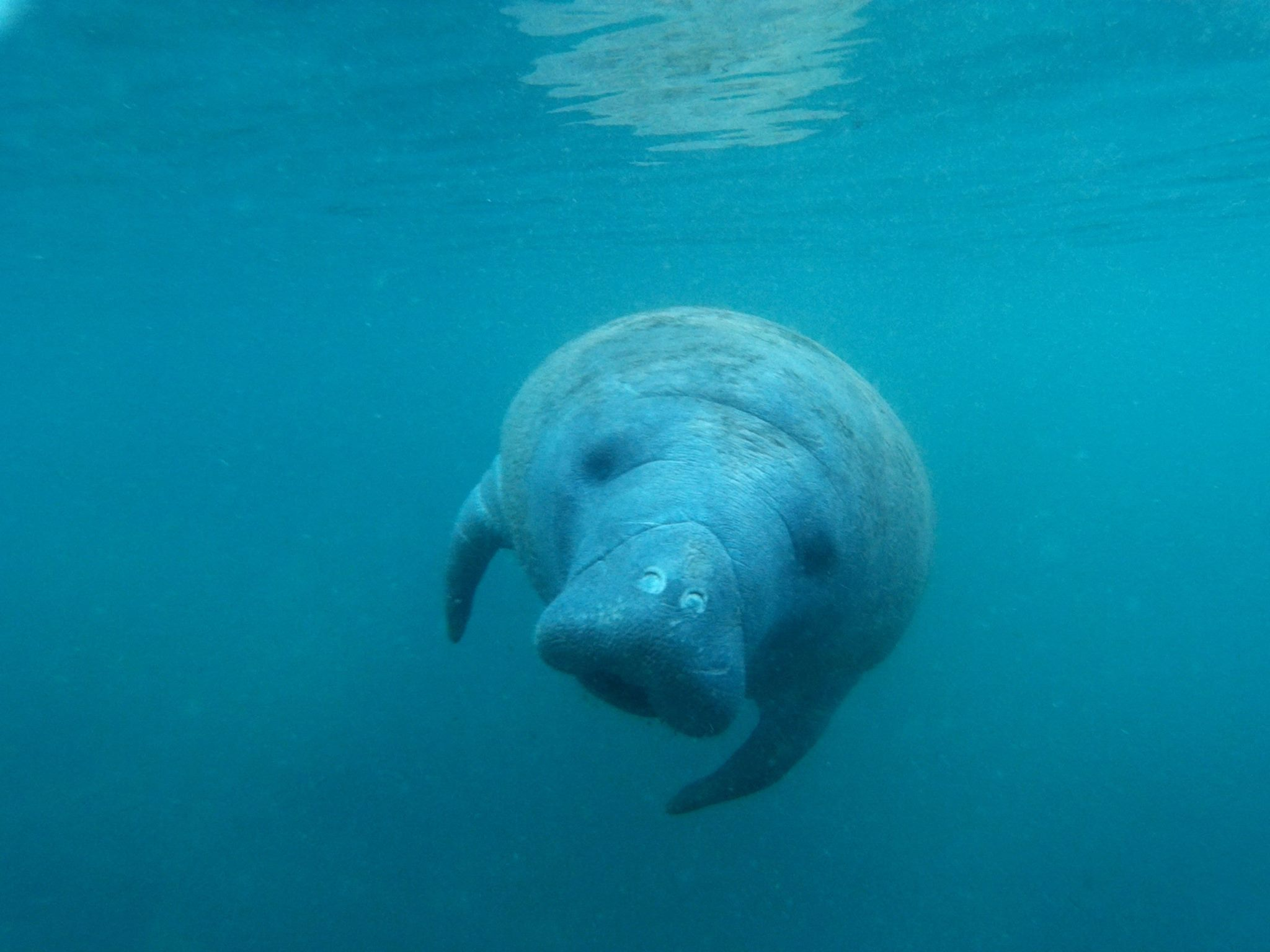 Responsible Tip. How To See Manatee Safely in the Wild