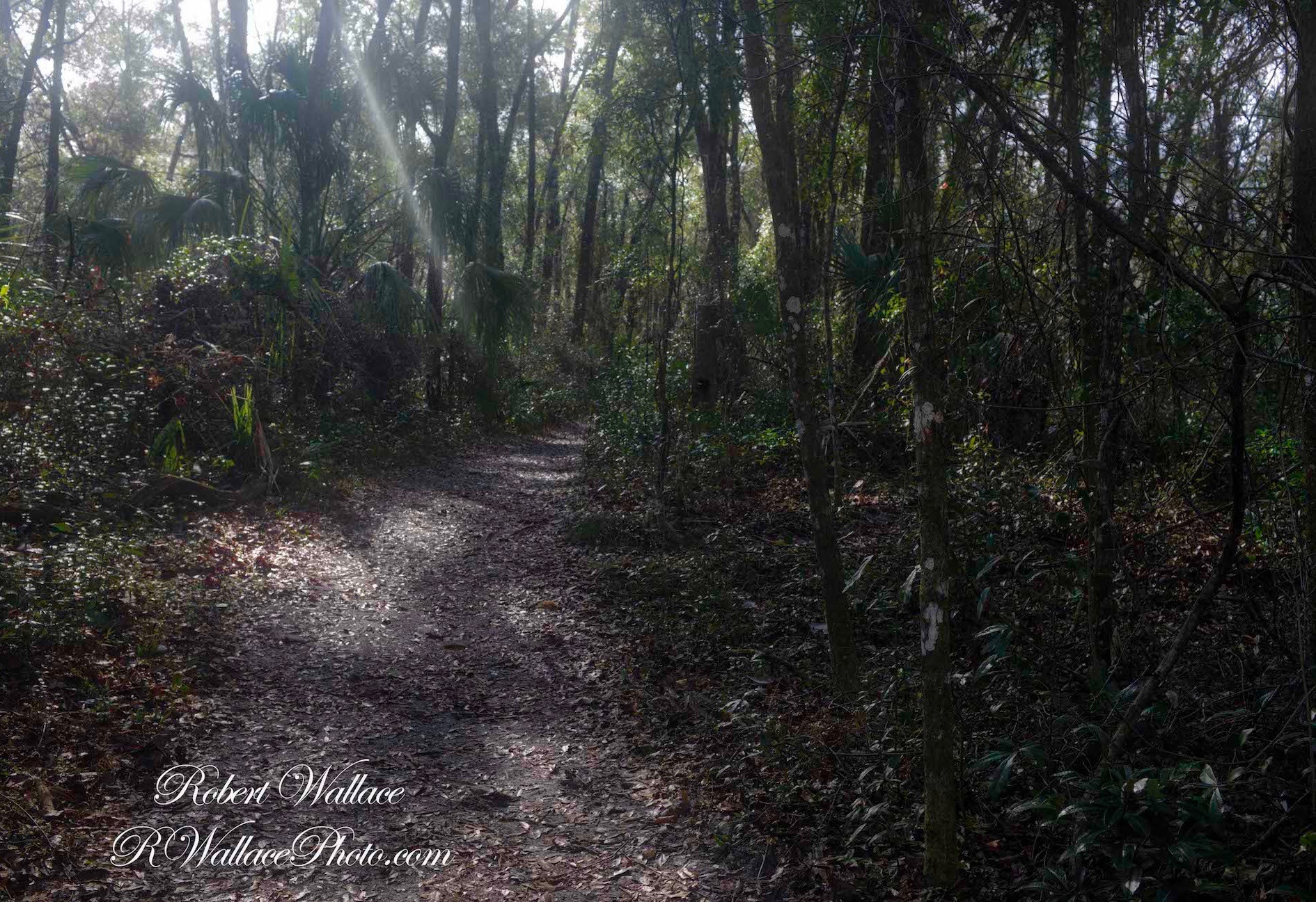 THE PAVED PATH ENDS WHERE THE FOREST BEGINS. IMAGE: ROBERT WALLACE, RWALLACE PHOTO