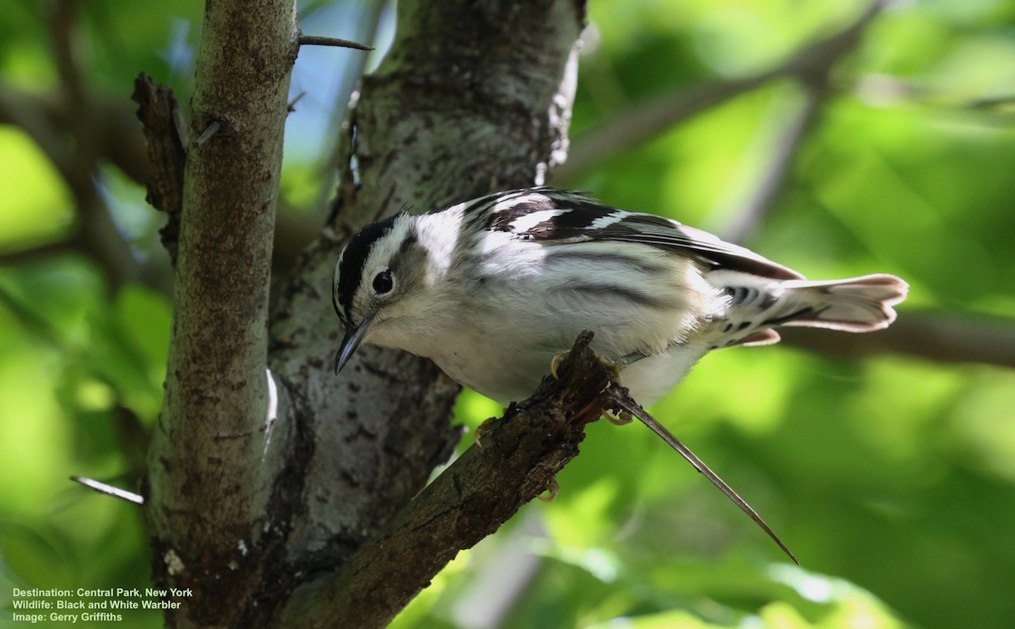 How to Find Warblers & Make Friends in the Hudson River Valley