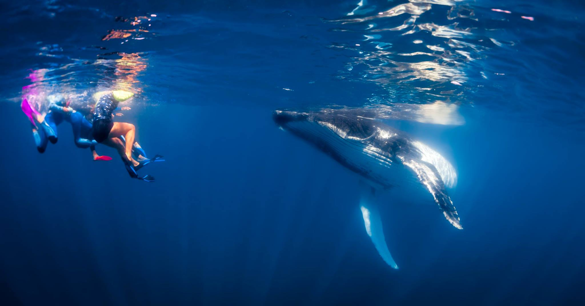 YES. YOU CAN SWIM WITH HUMPBACK WHALES HERE TOO. IMAGE: MICHAEL WIGRAM, VISIT NINGALOO FACEBOOK PAGE