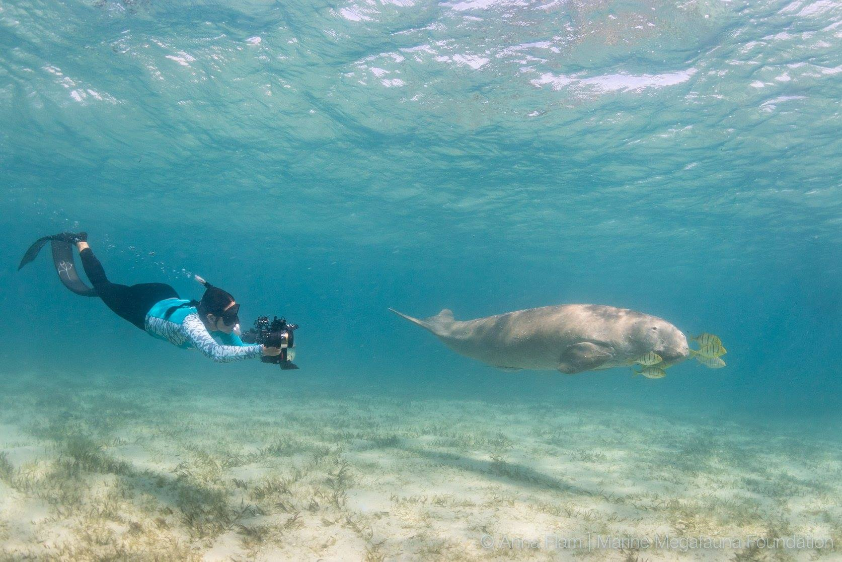 "DUBBED ""THE MANTA QUEEN' FOR HER GROUND BREAKING RESEARCH ON MANTA RAYS, THE MARINE MEGAFAUNA'S CO-FOUNDER, DR. ANDREA MARSHALL TAKES A MOMENT TO PHOTOGRAPH A DUGONG IN THE BARAZUTO ARCHIPELAGO, MOZAMBIQUE. IMAGE: THANKS NTO MARINE MEGAFAUNA FOUNDATION (FACEBOOK)"