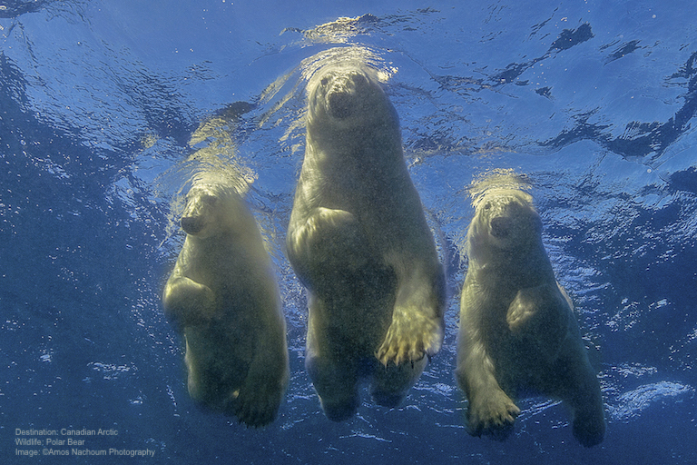 From Fear to Triumph. How to Dive with Polar Bears