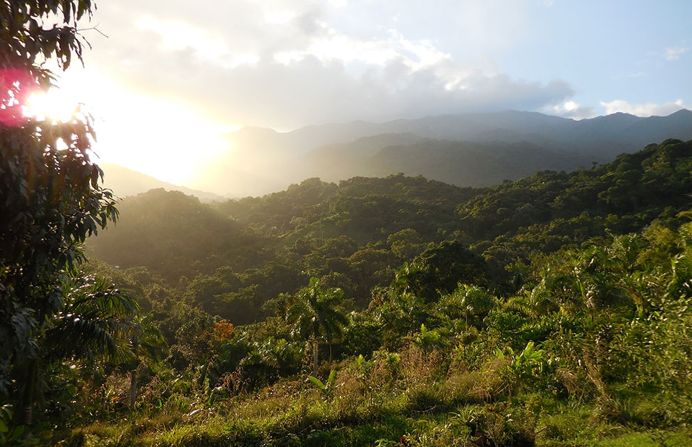 LOOKING OUT OVER THE LAST TROPICAL RAINFOREST IN THE UNITED STATES FROM YOUR TREEHOUSE WINDOW AT Yuquiyú. IMAGE: ©MARTIN HAGGLAND
