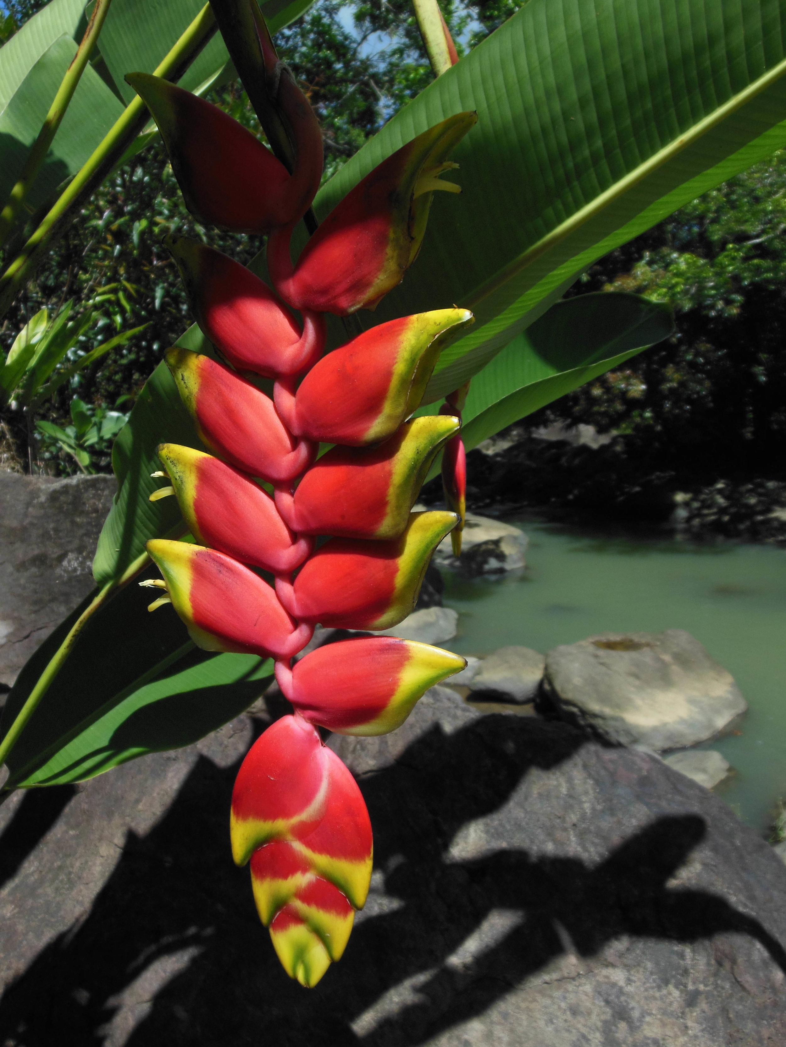 FLOWER-YUQUIYU-GARDEN-PUERTO-RICO.JPG